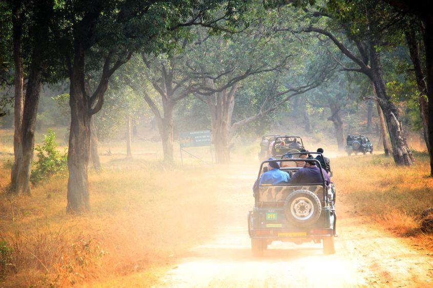 Tiger Safari in Madhya Pradesh