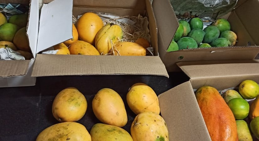 Varieties of Indian Mangoes